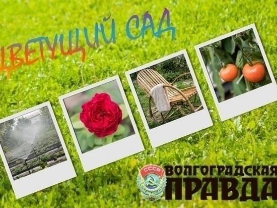 Победителей «Цветущего сада» в Волгограде выберут звезды, чемпионы и педагоги