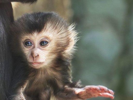 В Петербурге в зоопарке просят выбрать имя для детеныша макаки