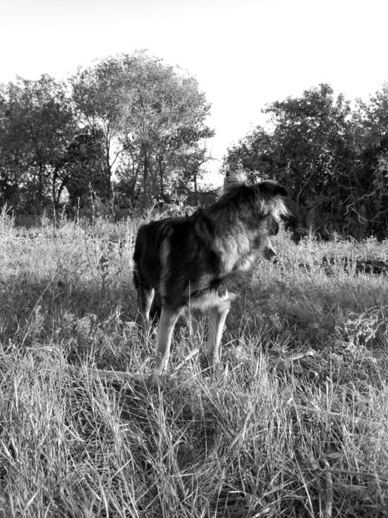 Жительнице Оренбурга мешает спать собачий лай