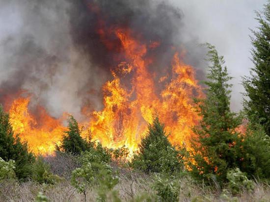 В Ростовской области прогнозируется чрезвычайный уровень пожароопасности