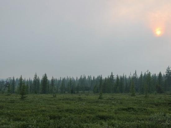 На Ямале нет новых лесных пожаров
