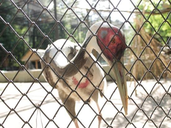 Как себя чувствует Новосибирский зоопарк после карантина