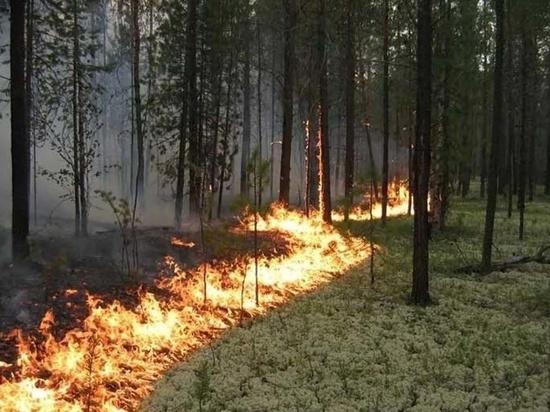 На Кубани с 25 по 27 июня прогнозируется высокая пожароопасность
