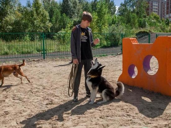 В Абакане оборудуют площадку для выгула собак при обустройстве Черногорского парка
