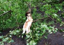 В Москве дерево упало на участников пикника, отмечавших день рождения