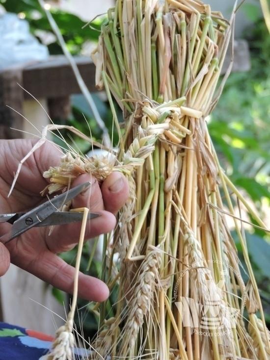 Туляков научат делать кукол из травы
