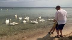Искупаться с лебедями: в Евпатории появился неожиданный аттракцион для туристов