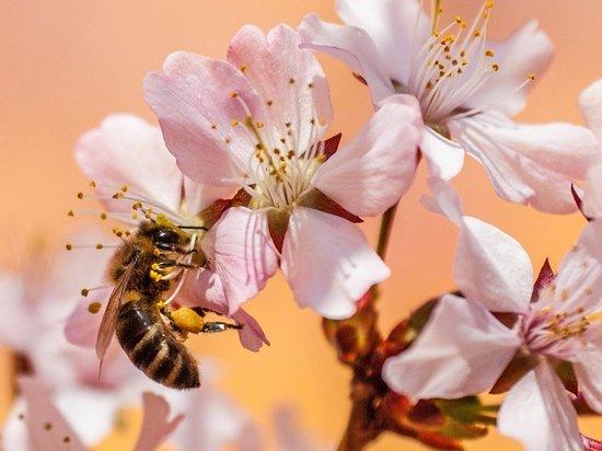 Специалист объяснил появление роя пчел на московской улице