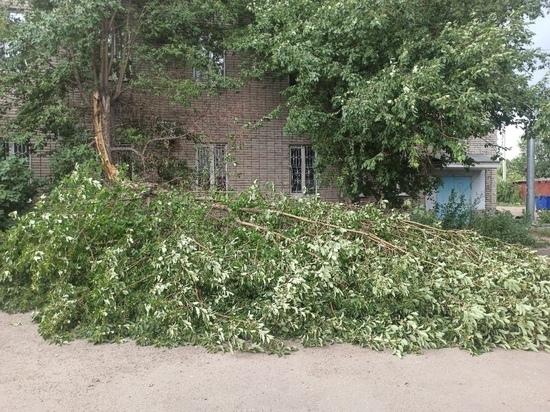 Пыльная буря разнесла по Рубцовску пакеты с мусором и повалила деревья