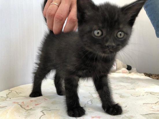 Бродячих животных в Саратове становится больше из-за жителей, выбрасывающих котят и щенков