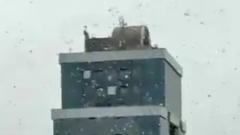 В Индии над городом пронеслась гигантская стая саранчи: жуткие кадры
