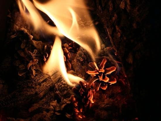 В Марий Эл сохраняется высокая пожароопасность лесов