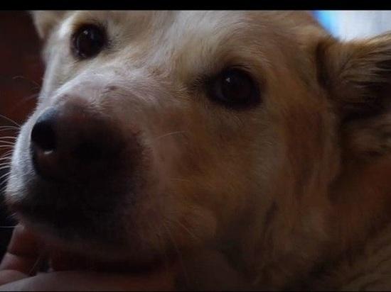 Томичка сняла документальный фильм о проблеме бездомных животных