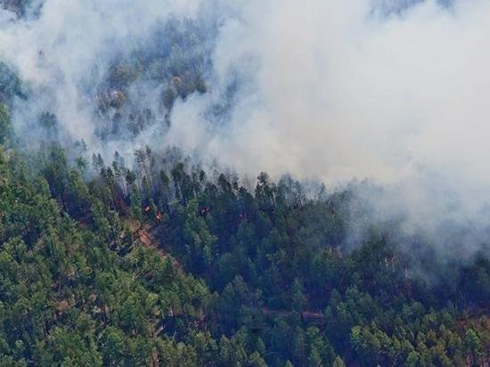 Эколог пояснил, почему в Сибири опять горит миллион гектаров леса