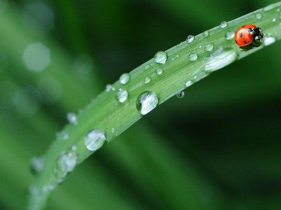 В Брянской области 30 июня пройдет дождь с грозой