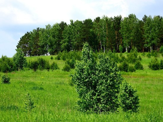 Тепло и дожди: какая погода будет в Красноярске в июле
