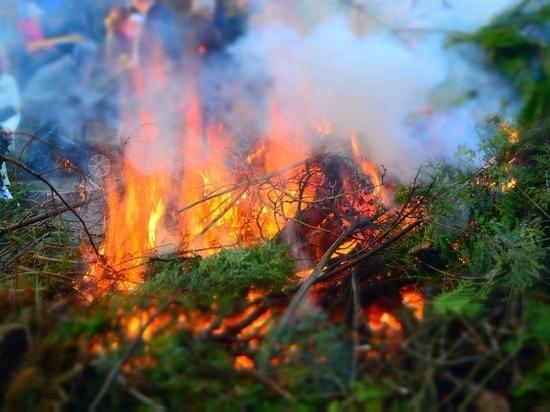Туристам запрещено посещать лес на Ольхоне