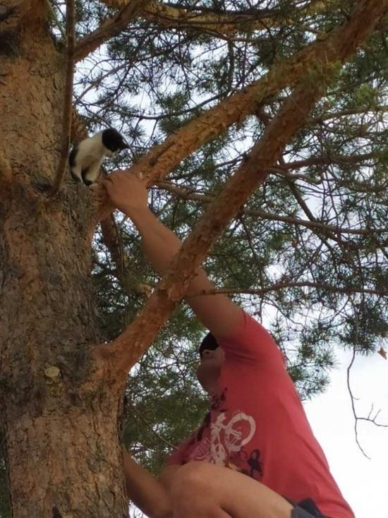 Пожарный в Бурятии спас просидевшего два дня на дереве котенка