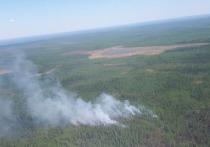 На Ямале локализовали три лесных пожара