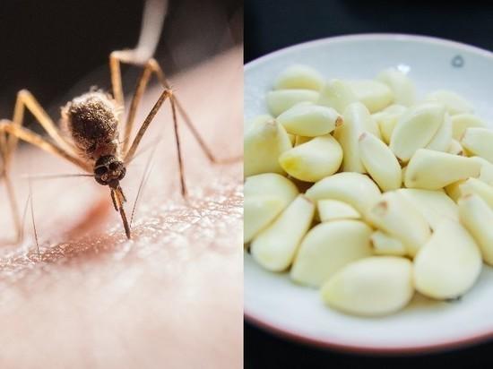Москвичам рекомендовали защищаться от комаров чесноком