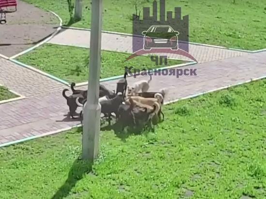 На Свердловской свора из 15 собак растерзала кошку