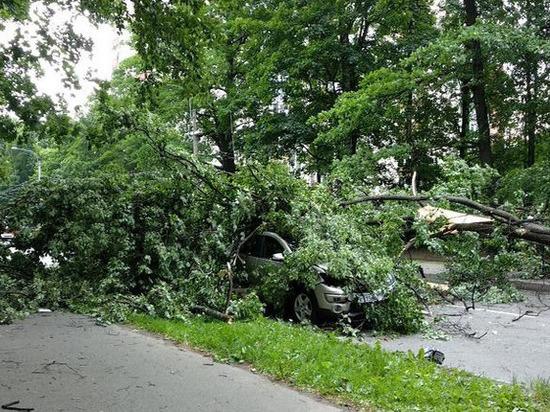 В Петербурге четыре человека пострадали из-за падения дерева на машину