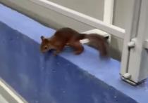 Маленький грызун пришел на стадион на главный матч тура чемпионата России и в панике убежал, увидев футболистов и фанатов.