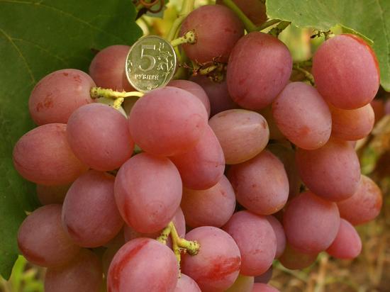 Волгоградцам предлагают попробовать виноград со вкусом «дюшеса»