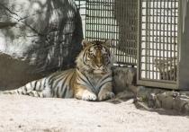Новосибирцы недовольны повышением цен на билеты в зоопарк