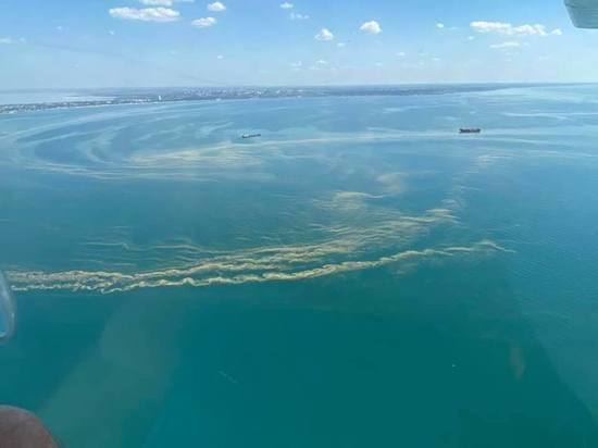 Черное море возле Одессы превратилось в зеленый кисель