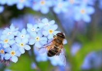 2 июля: Категорические запреты в День Зосимы Пчельника