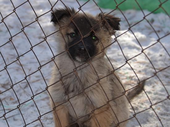 Принято решение по базе, которую просят под приют зоозащитники в Чите