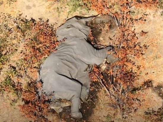 Странная гибель слонов, чума, свиной грипп: откуда человечеству ждать новой эпидемии?