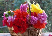 В Муравленко мужчины украли цветы от памятника в парке Победы в подарок девушке