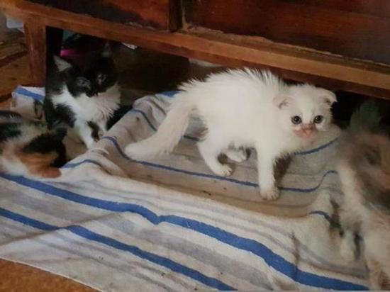 Под Новосибирском обнаружили кошачий концлагерь