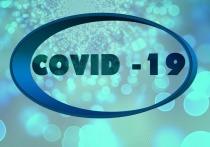 Германия: За сутки количество заболевших Covid-19 возросло на 446 человек