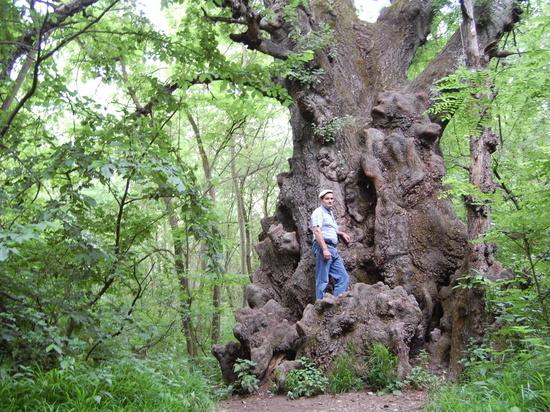 Одно из самых больших деревьев в России нашли на Ставрополье