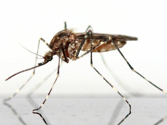 Врачи рассказали о заражении глистами от комаров