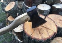 При разработке карьера в Вяземском районе незаконно вырубили деревья