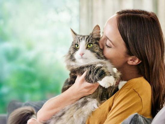 В России появился первый корм для кошек, сокращающий аллергены на шерсти