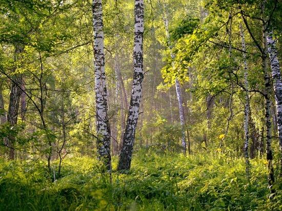 «Уралэнергосбыт» спасает деревья, переходя на электронные квитанции