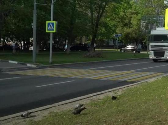 На московских «зебрах» уберут желтые полосы