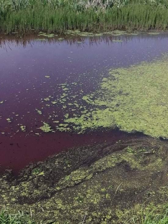 Прудовая вода под Тулой стала фиолетовой