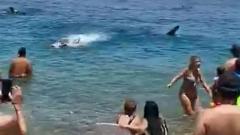 В Израиле акула перепугала отдыхающих на пляже: видео