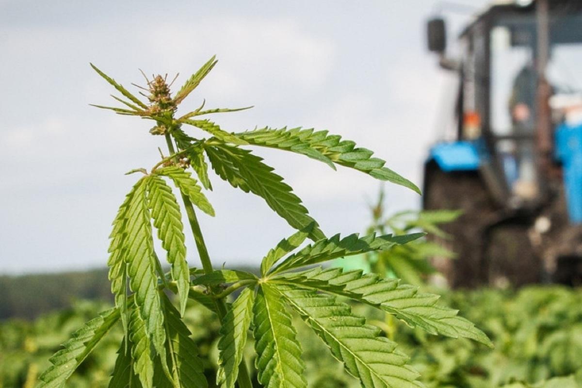 Тува конопля сколько стоит 1кг марихуаны