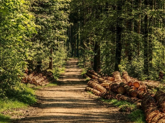 Жителям Подмосковья напомнили о безопасности в лесу