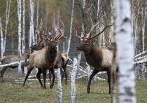Минприроды подготовило новые ограничения для охотников: стрелять на шум запретят