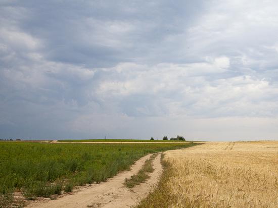 Нижегородские сельхозпроизводители просят защитить урожай
