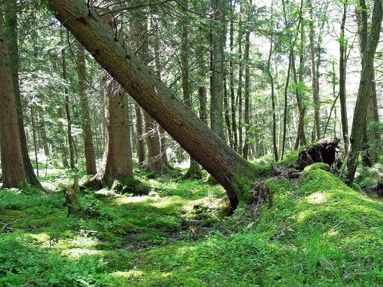Ветер повалил около 130 деревьев в Москве и Подмосковье