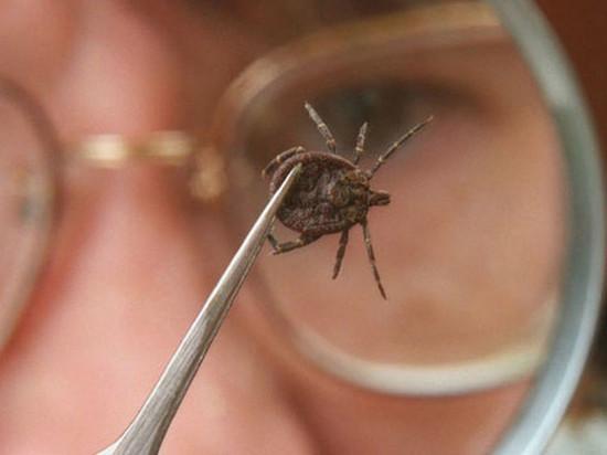 Два человека в Калмыкии заболели лихорадкой от укуса клеща